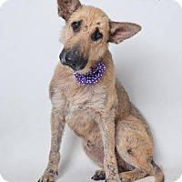 Adopt A Pet :: Dakota  - In Foster Home - Marrero, LA