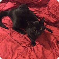 Adopt A Pet :: Marlo - Scottsdale, AZ