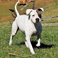 Adopt A Pet :: Femma - Arden, NC