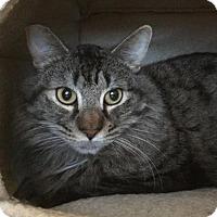 Adopt A Pet :: Cliff - Sacramento, CA