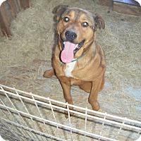 Adopt A Pet :: Moose - Mansfield, TX