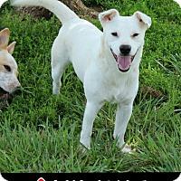 Adopt A Pet :: Rory (POM-DC) - Plainfield, CT