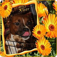 Adopt A Pet :: Kiser - Crowley, LA