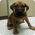 Adopt A Pet :: Candice