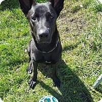 Adopt A Pet :: SHADOW - Winnipeg, MB