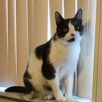 Adopt A Pet :: Bindi - Davison, MI