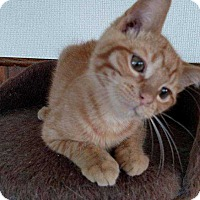 Adopt A Pet :: Michelangelo - South Bend, IN