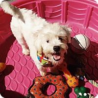 Adopt A Pet :: Leah - San Diego, CA