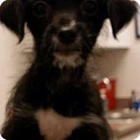 Adopt A Pet :: Beast - Tijeras, NM