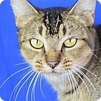Adopt A Pet :: Samantha - Carencro, LA