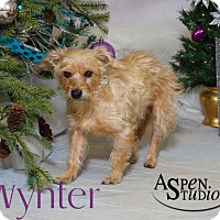 Adopt A Pet :: Wynter - Valparaiso, IN