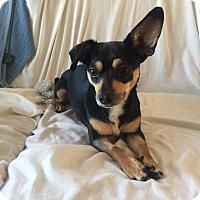 Adopt A Pet :: Triscuit - San Francisco, CA