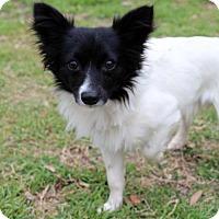 Adopt A Pet :: Jasper - Waco, TX