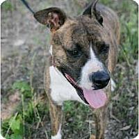 Adopt A Pet :: Mimi - Meridian, MS