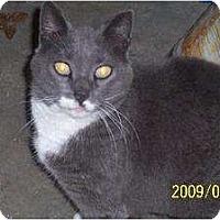 Adopt A Pet :: Misha - Mtn Grove, MO