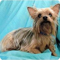 Adopt A Pet :: Dixie - Mooy, AL