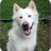 Adopt A Pet :: Apollo - Huntington Station, NY