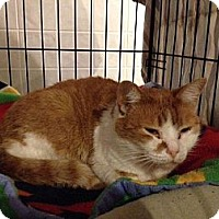 Adopt A Pet :: Noni - Byron Center, MI