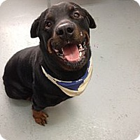 Adopt A Pet :: Jake - Montreal, QC