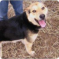 Adopt A Pet :: Codie - Antioch, IL