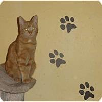 Adopt A Pet :: Blaze - Barnegat, NJ