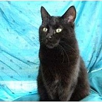 Adopt A Pet :: Licorice - Bay City, MI