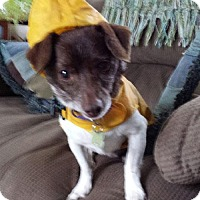 Adopt A Pet :: Myles - pending - Glastonbury, CT
