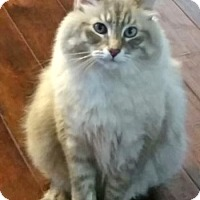 Adopt A Pet :: Berkeley - Davis, CA