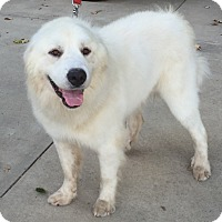 Adopt A Pet :: Goose ADOPTION PENDING - Bloomington, IL