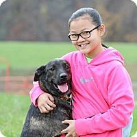 Adopt A Pet :: Dagney - Portland, ME