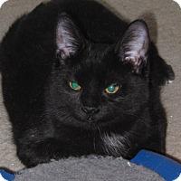 Adopt A Pet :: Camille - Barrington Hills, IL