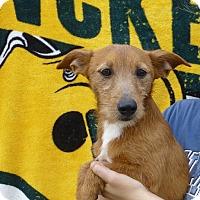 Adopt A Pet :: Gumdrop - Oviedo, FL