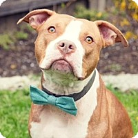 Adopt A Pet :: Cam - Kettering, OH