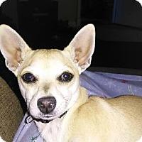 Adopt A Pet :: MINNIE - Hurricane, UT