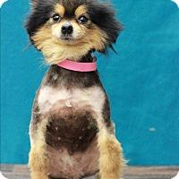 Adopt A Pet :: Nissan - Waldorf, MD