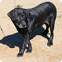 Adopt A Pet :: Bosco - Gardnerville, NV