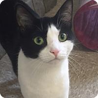 Adopt A Pet :: Lola - Cashiers, NC