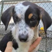 Adopt A Pet :: Champ#4F - Orlando, FL