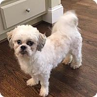 Adopt A Pet :: Charlie - Atlanta, GA