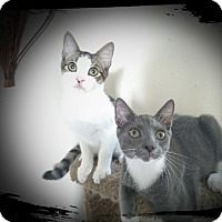 Adopt A Pet :: Spunkee - Richmond, VA