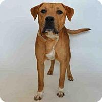 Adopt A Pet :: RUFUS - Martinez, CA