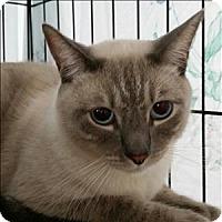 Adopt A Pet :: Simba - Oceanside, CA