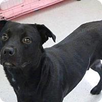 Adopt A Pet :: Gunner - Gainesville, FL