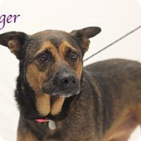 Adopt A Pet :: Ginger - Bradenton, FL