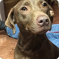 Adopt A Pet :: Cami - Bridgewater, NJ