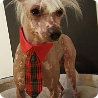 Adopt A Pet :: Gatsby - Los Angeles, CA