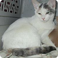 Adopt A Pet :: SCOUT - detroit, MI