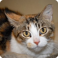Adopt A Pet :: Callie - Wilmington, OH