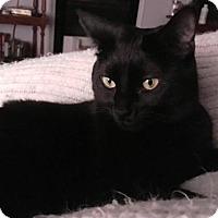 Adopt A Pet :: Skylar - Aurora, CO