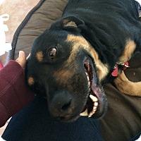 Adopt A Pet :: Maui - Beverly Hills, CA